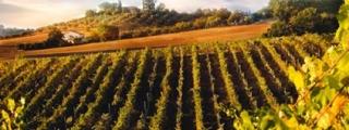 Химически анализ на вино